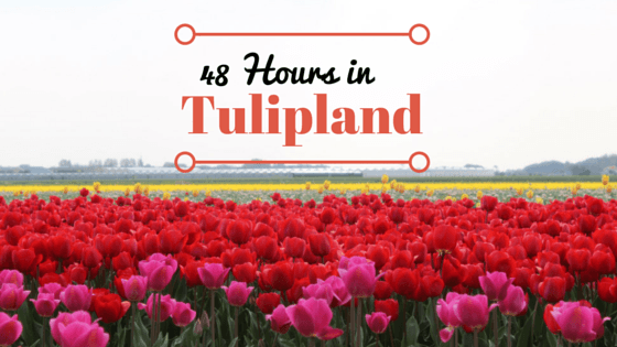 The Bollenstreek: 48 Hours in Tulipland
