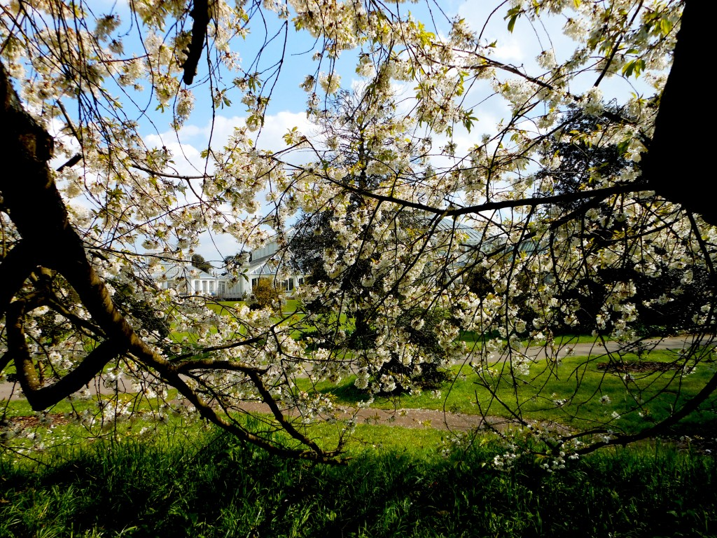 Richmond and Kew: How to Find Spring in London