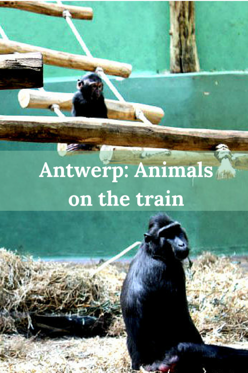 Antwerp: animals on the train - travellousworld.com