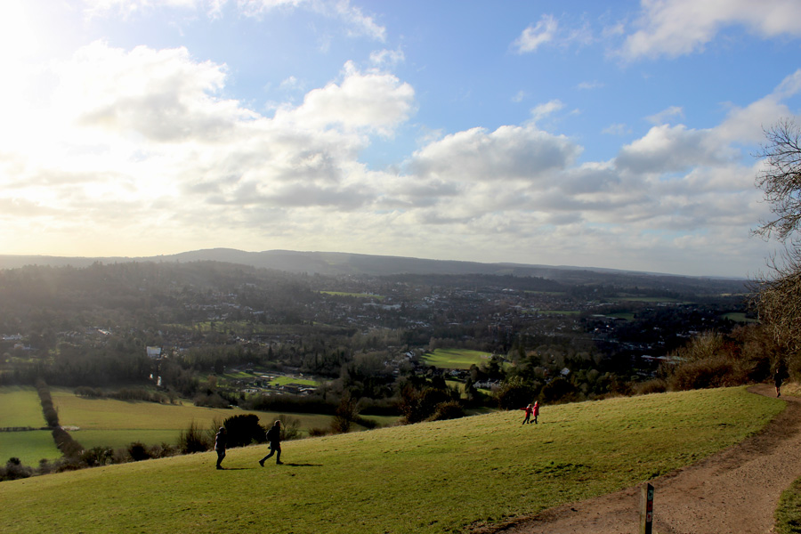Walk the Walk – Box Hill