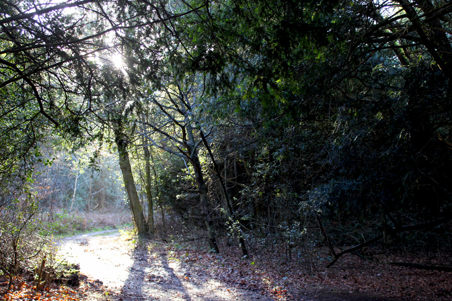 play-forest-family-trail