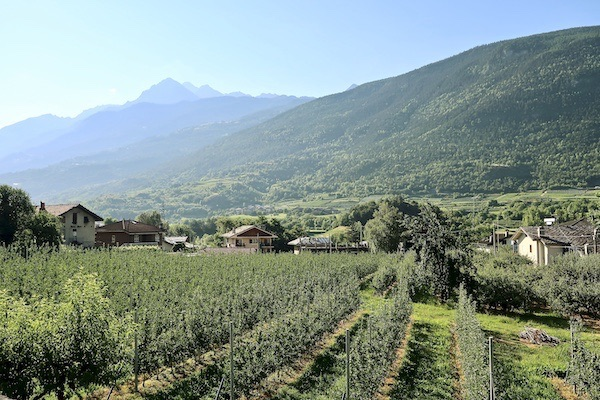 vineyards aosta italy